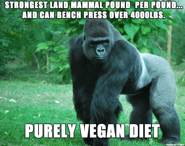 Gorilla on a vegan diet meme