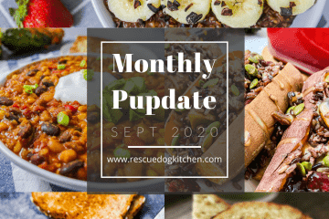 Monthly Pupdate september rescue dog kitchen