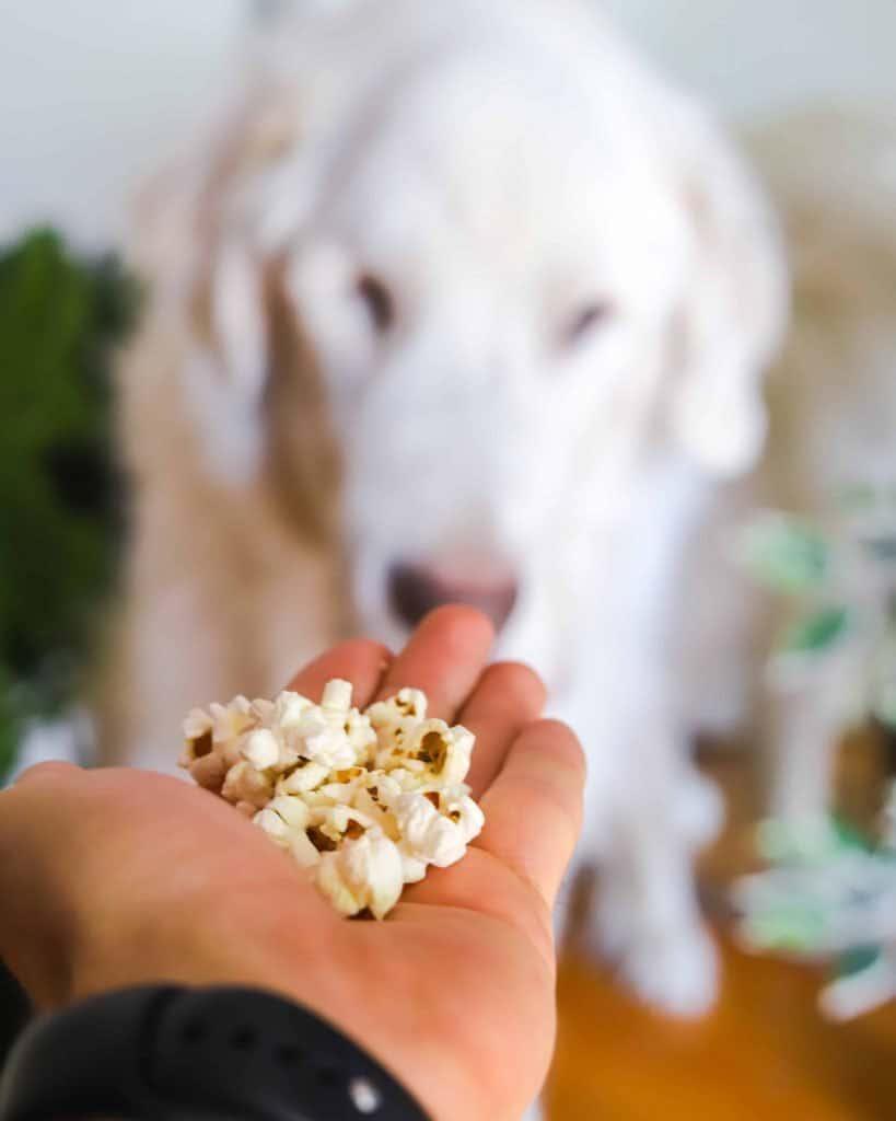 Air Fryer Popcorn Rescue Dog Kitchen